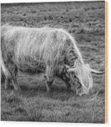 Windblown In Scotland Black And White Wood Print