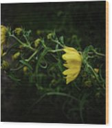 Windy Weeds Wood Print