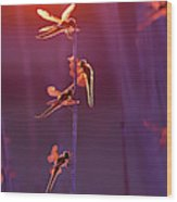 Winged Wonders - Dragonflies At Sunset Wood Print
