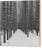 Winter Forest In Black And White Wood Print