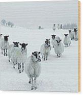 Winter Sheep V Formation Wood Print