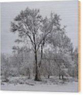 Winter Survivor Wood Print