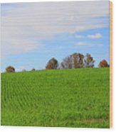 Winter Wheat In October In Southern Ontario Wood Print
