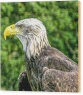 Wisconsin Bald Eagle Wood Print