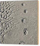 Wombat Footprints On Deserted Beach Wood Print