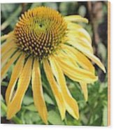 Yellow Cone Flower Wood Print