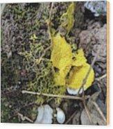 Yellow Enveloping White Wood Print
