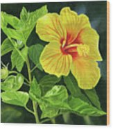 Yellow Hibiscus With Bright Green Leaves Wood Print