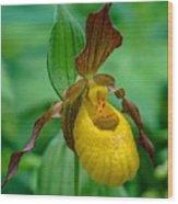 Yellow Lady's Slipper Wood Print