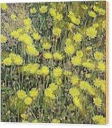 Yellow Meadow Wood Print