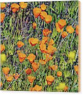 Yellow Poppies Of California Wood Print