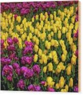 Yellow Star Tulips Wood Print