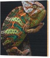 Yemen Chameleon Wood Print