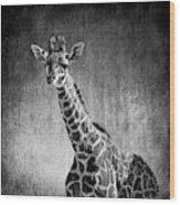 Young Giraffe Black And White Wood Print