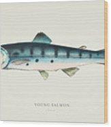 Young Salmon Illustration 1856 Wood Print