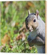 Your Friendly Neighborhood Squirrel Wood Print