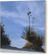 Yucca Plant In Rippled Sand Dunes In White Sands National Monument - Newm500 00107 Wood Print