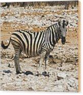 Zebra And White Rocks Wood Print