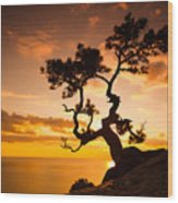 Zen Is A Tree On The Cliff Rocks And Wood Print