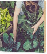 Young Woman Harvesting Home Grown Lettuce Wood Print