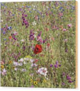 Mixed colourful wildflowers Wood Print