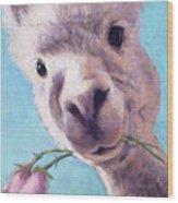Alpaca Romance Wood Print