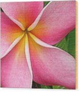 April Plumeria Wood Print