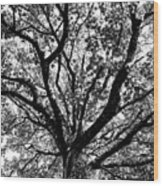 Autumn Sycamore Wood Print
