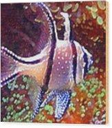Banggai Cardinalfish Wood Print