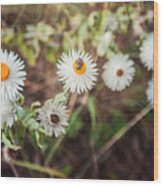 Beatle Flower Wood Print