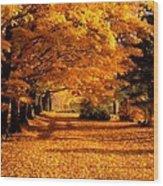 Blazing Autumn Oaks Wood Print