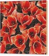 Bouquet of Red-Orange Tulips Wood Print