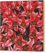 Bouquet of Red Tulips Wood Print