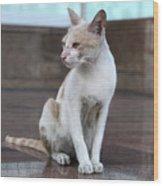 Cat Sitting On Marble Floor Wood Print