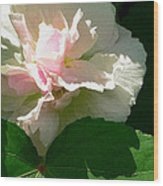 China Rose 1 Wood Print