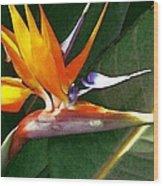 Crane Flower Wood Print