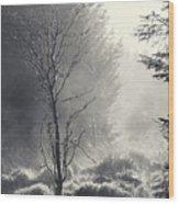 Dawn Mist Clearing Wood Print
