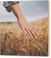 Golden wheat fields Wood Print