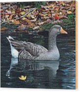 Great White-fronted Goose Wood Print