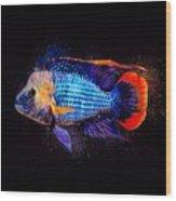 Green Terror Cichlid Fish Wood Print