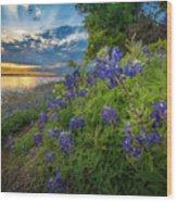 Heavenly Flower Mound Wood Print