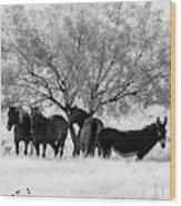 Horses Ass Wood Print