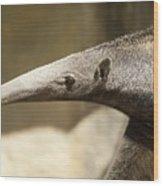It's Mr. Long Nose Wood Print