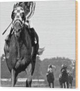 Looking back, 1973,  Secretariat, stretch run, Belmont Stakes Wood Print