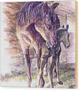 Maternal Bond Five Hours Old Arabian Mare With Newborn Foal Wood Print