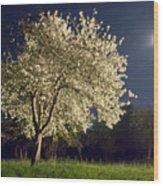 Moonlit Blooming Tree Wood Print