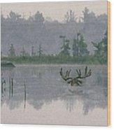 Moose Crossing Wood Print