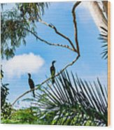 Neotropic cormorant Wood Print