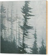 Pine Portrait Wood Print