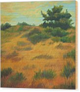 Province Lands Cape Cod Wood Print